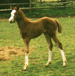 leighfoal